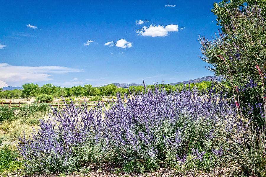 Xeriscape gardens for Southwest landscaping plants